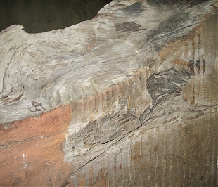 Sequoia detail